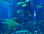 Тур в отель Atlantis The Palm 5* 5
