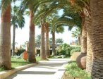Тур в отель Palm Beach 4*  12