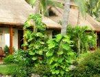 Тур в отель Bamboo Village 3* 8
