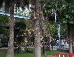 Тур в отель Pattaya Park 3* 32