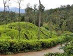 Шри-Ланка 36