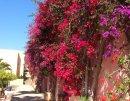 Candia Park Village 4* (Агиос Николаос) 21