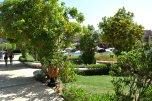 Rehana Sharm 4* (Шарм-Эль-Шейх) 3