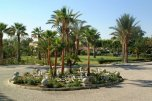 Palm Beach 4* (Ларнака) 9