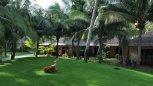 Terracotta Resort 4* (Фантьет) 8