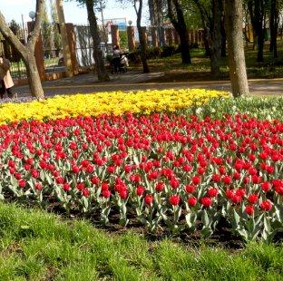 "Тур ""Весенний бал тюльпанов и мини Диснейленд"""