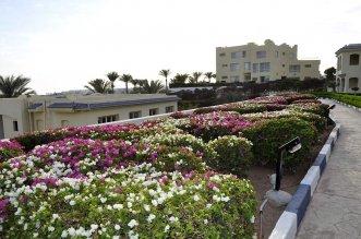 AA Grand Oasis Resort 4* (Шарм-Эль-Шейх) 14