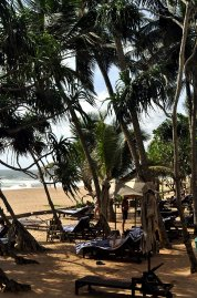 Pandanus Beach 4* (Индурува) 4