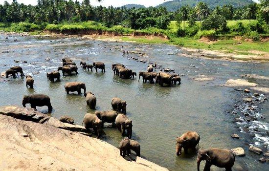 Что нужно знать о Шри-Ланке