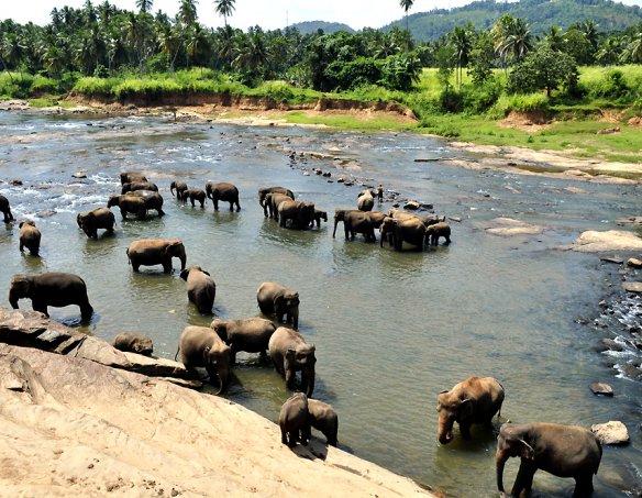 Йога-тур в Шри-Ланку 2018 10