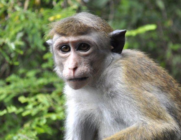 Йога-тур в Шри-Ланку 2018 11