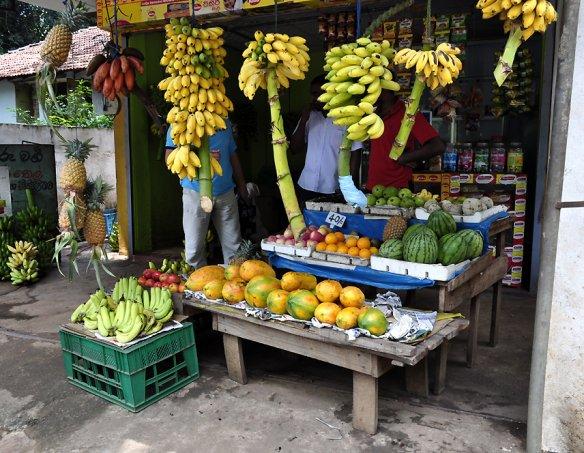 Йога-тур в Шри-Ланку 2018 4