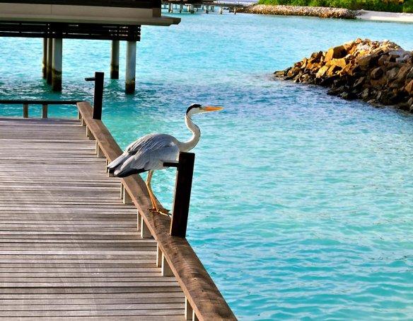 Мальдивы  22