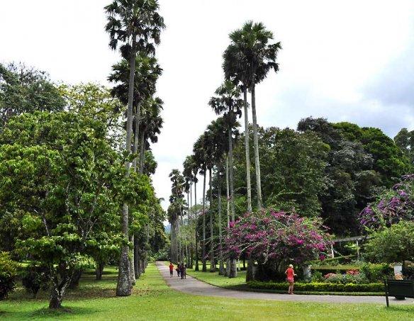 Шри-Ланка 46