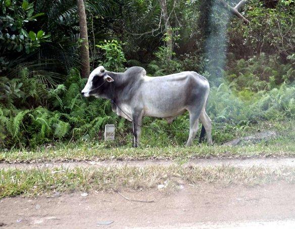 Танзания (Занзибар) 4